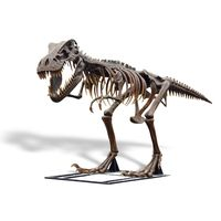Thumbnail for T-Rex Skeleton Sculpture