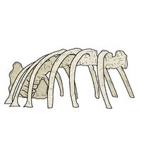 Thumbnail of Dino Rib Skeleton