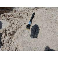 Thumbnail of Trilobite Fossil