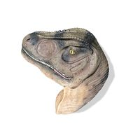 Thumbnail of Allosaurus Head