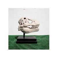 Thumbnail for T-Rex Skull on Base