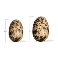 Theropod Egg
