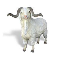 Thumbnail for Angora Goat