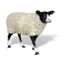 Thumbnail for Suffolk Sheep