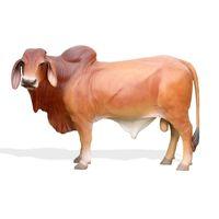 Thumbnail of Large Brahman Bull