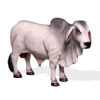 Thumbnail of Small Brahman Bull Grey
