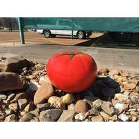 Thumbnail of Tomato