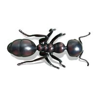 Thumbnail of Ant Sculpture