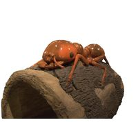 Thumbnail of Ant Log Crawler