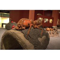 Thumbnail of Ant Log Crawler