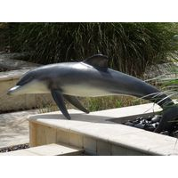 Thumbnail of Large Dolphin