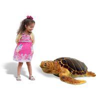 Thumbnail of Loggerhead Turtle