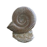 Thumbnail of Ammonite Climber