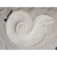 Thumbnail for Large Ammonite Fossil
