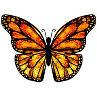 Thumbnail of Butterfly Canopy