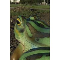 Thumbnail of Colorful Frog Play Sculpture