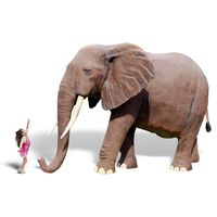 Thumbnail of 8ft African Elephant