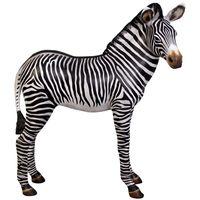 Thumbnail for Zebra Foal