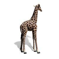 Thumbnail of 6ft Baby Giraffe