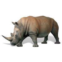 Thumbnail for Rhinoceros
